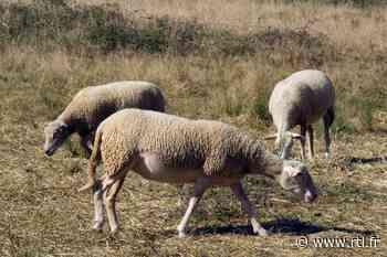 Essonne : des animaux du parc animalier de Chilly-Mazarin dérobés dans la nuit - RTL.fr