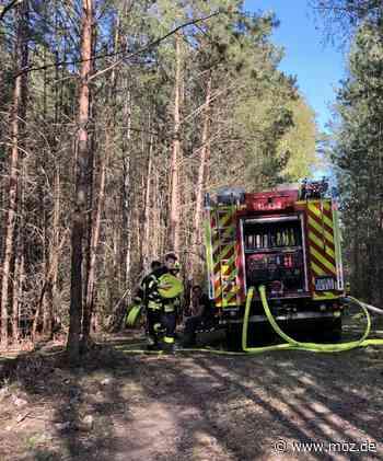 Feuerwehr: Waldbrand bei Bad Saarow gelöscht - Märkische Onlinezeitung