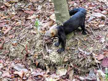 CVS liberó fauna silvestre confinada en el Zooparque Los Caimanes - LA RAZÓN.CO