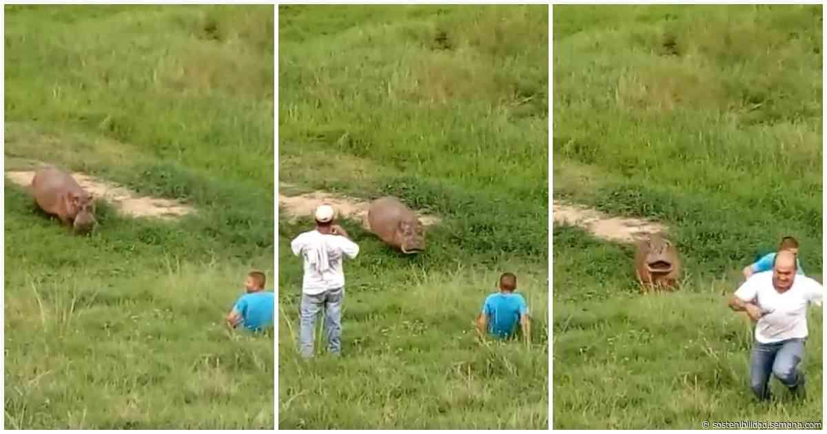 Hipopótamo intenta atacar a habitantes de Puerto Triunfo - Semana