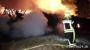 Brennender Holzstapel: Feuerwehr verhindert Waldbrand bei Wandlitz - rbb|24