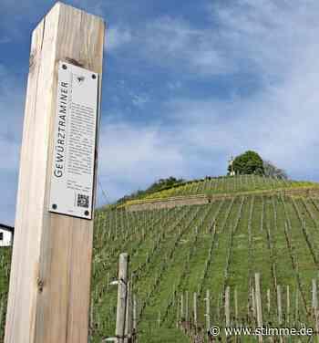 Ausblicke vom Weinlehrpfad Neckarsulm - Heilbronner Stimme
