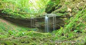 Butzerbachtal bei Kordel: Von wegen einsamer Waldweg - Trierischer Volksfreund