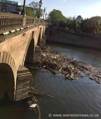 Swan found dead among river debris that can't be cleared due to coronavirus - Worcester News
