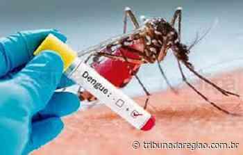 Menino de 8 ano morre de dengue hemorrágica em Assis Chateaubriand - Arial