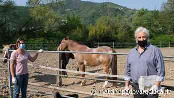Torreglia, arrivano i nostri con fieno e mele per i poveri cavalli affamati in quarantena - Il Mattino di Padova