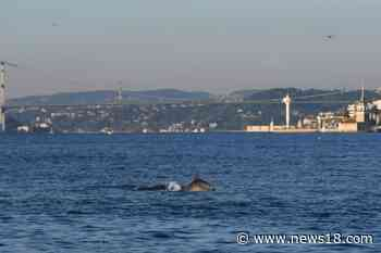 After Rare Sight in the Ganges, Dolphins Spotted in Bosphorus Strait Between Europe and Asia - News18