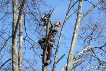 Val-d'Oise. Un élagueur gravement blessé à Bezons - La Gazette du Val d'Oise - L'Echo Régional