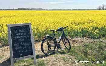 Gratis aangeboden in Groningen: adembenemend uitzicht op de koolzaadvelden bij Bedum - Dagblad van het Noorden