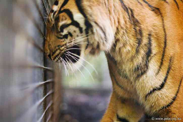 Horror as Animals at German Zoo May Be Fed to Each Other