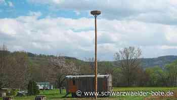 Hechingen: Hannes Reis freut sich über das Storchennest in Boll - Hechingen - Schwarzwälder Bote