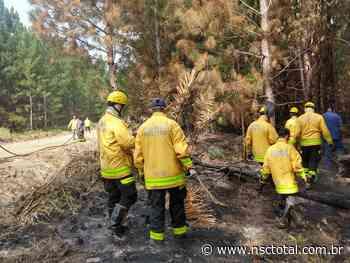 Incêndio florestal em Barra Velha chega ao nono dia   NSC Total - NSC Total