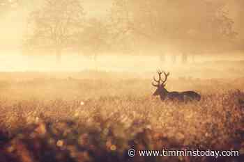 Do you know who discarded deer parts in the New Liskeard area? - TimminsToday