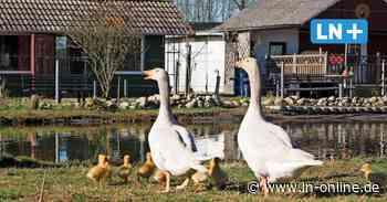 Natur/Tiere - Besucher willkommen: Nachwuchs in der kleinen Arche Wahlstedt - Lübecker Nachrichten