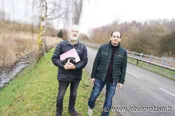 Roost-Warendin : Ils recrutent des bénévoles pour faire traverser les grenouilles   L'Observateur - L'Observateur