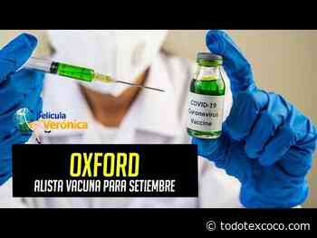 Vacuna contra coronavirus podría estar lista en septiembre: Oxford - Noticias de Texcoco