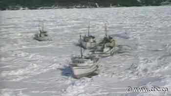 Sealers stranded near Baie Verte - CBC.ca