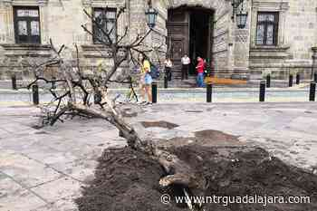 Naranjos retirados, en riesgo de morir - NTR Guadalajara
