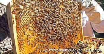 Bienenzuchtverein Ottweiler stellt sich vor - Saarbrücker Zeitung