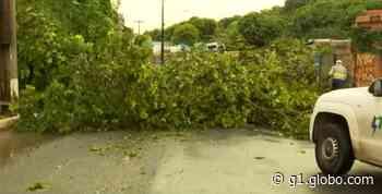 Árvore desaba e interdita rua de acesso ao Engenho Velho de Brotas, em Salvador - G1