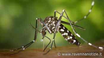 Lotta alla zanzara: al via a Cotignola la consegna porta a porta del prodotto antilarvale - ravennanotizie.it