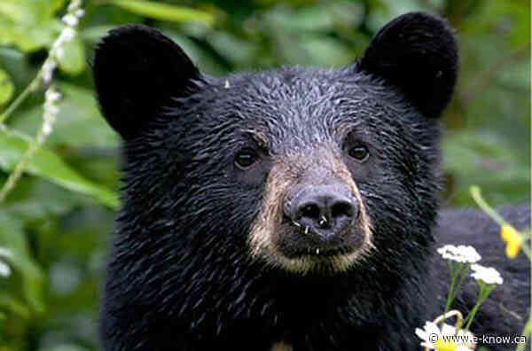 Help give bears a natural chance