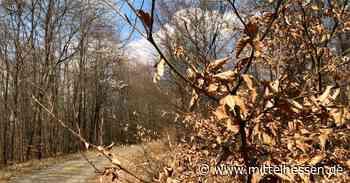 Stadt Biedenkopf warnt: Kippen gehören nicht in den Wald - Mittelhessen