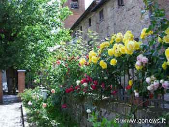 Rsa Gambassi Terme, fascicolo aperto dalla procura. Si indaga su altre due strutture del Fiorentino - gonews.it - gonews