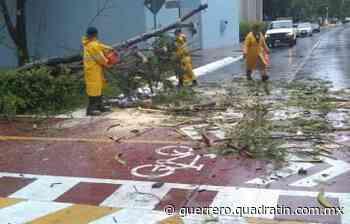 Tormentas locales tiran árboles en Iguala y Huitzuco - Quadratín Michoacán
