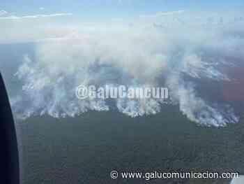 Alerta en zona de Bacalar por incendio forestal - Galu