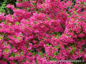 Bagolino - Ripresa a colori - Valle Sabbia News