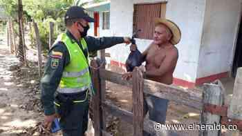 Policía entrega más de 600 kilos de carne en Planeta Rica - El Heraldo (Colombia)