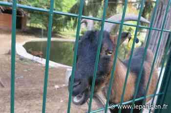 Essonne : des animaux du parc animalier de Chilly-Mazarin dérobés dans la nuit - Le Parisien
