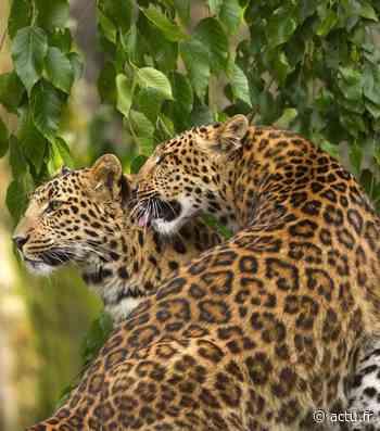 Yvelines. Les animaux du parc de Thoiry en direct sur vos téléphones - actu.fr