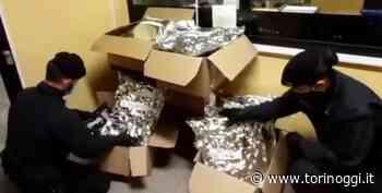 Orbassano, scaricano 30 kg di marijuana da un Tir francese: arrestati due trafficanti di droga [VIDEO] - TorinOggi.it