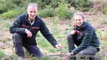 Im Forstamt Dassel ist das Ziel bereits erreicht - Einbecker Morgenpost