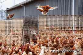 Nieuwsfoto's: Kippen mogen weer naar buiten - Boerderij