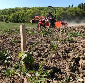 Seine-et-Marne. Un viticulteur bio de Chelles obtient le label « vin d'Île-de-France » - actu.fr