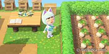 More Custom Path Codes for Animal Crossing: New Horizons - aviralbox