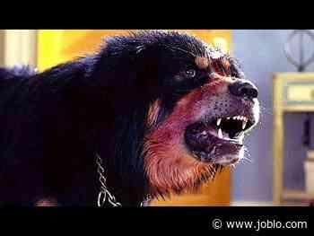 MAN'S BEST FRIEND Trailer + Clips (1993) RIP John Lafia - JoBlo.com