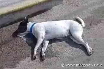 Detenido por envenenar a un perro en el centro de Tixkokob - Meganews