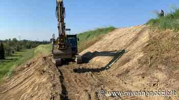 Cotignola. Nuovi danni all'argine del fiume Senio, immediato intervento di riparazione e bonifica - RavennaNotizie.it - ravennanotizie.it