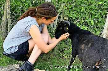 Jugendfarm Kornwestheim - Nach Schafschlachtung: Technik schützt nun die Tiere - Stuttgarter Zeitung