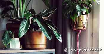 Become an Indoor Plant Parent