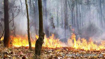 Von der Marwitz: Große Waldbrandgefahr angesichts vertrockneter Bäume und großer - Beschaffungsdienst GaLaBau