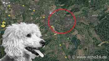 Obersulm: Tierrettung im Einsatz - Polizei findet halbierten Hund | Region - echo24.de