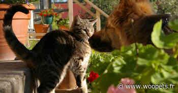 Chiens et chats victimes d'actes malveillants à Saint-Jory (31), où la préoccupation monte - Woopets