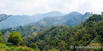 Vereda Pan de Azúcar fue declarada libre de fauna silvestre en cautiverio - Telemedellín