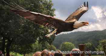 Naturwildpark in Freisen ist wieder geöffnet - Saarbrücker Zeitung