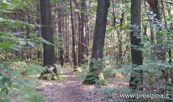 Tradate: Parco Pineta isolato - La Prealpina